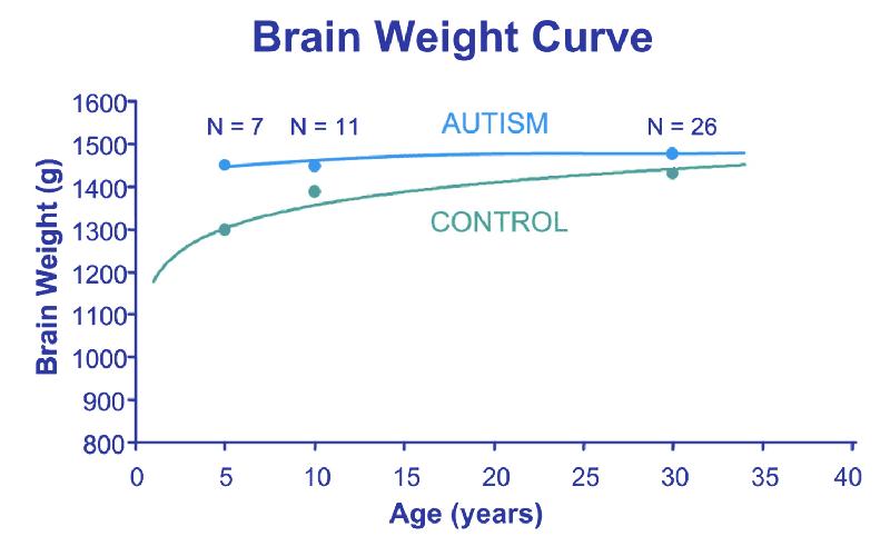 Embrace Autism | Autistic brain differences – Enlarged brains | diagram BrainWeightCurveAge