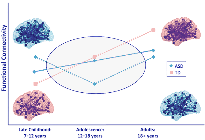 Embrace Autism | Autistic brain differences: Connectivity | diagram FunctionalConnectivityModel