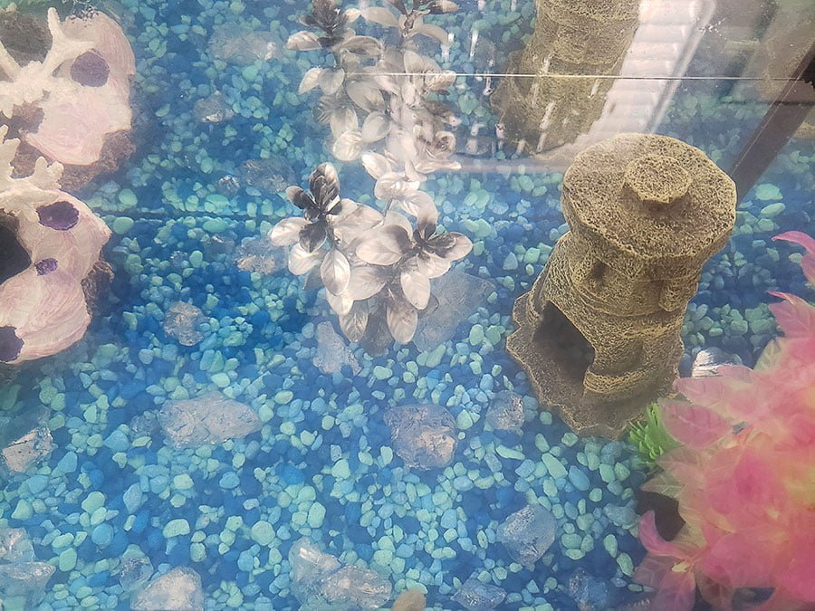 A photo of our empty fish tank.
